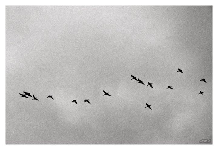 Fuglenes flukt